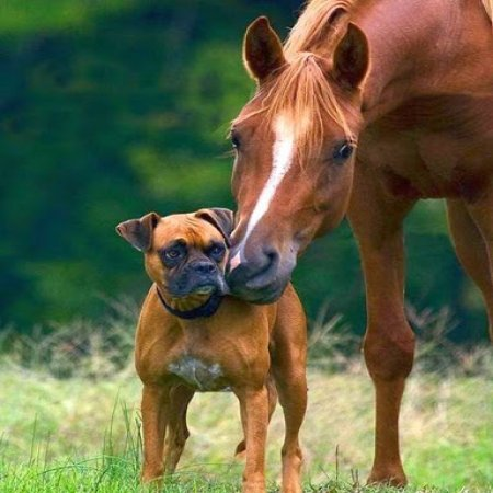 Animales Amigos Foto