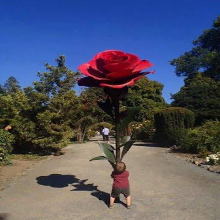 Arte Urbano Una Rosa