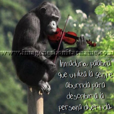 Chimpance Tocando Violin