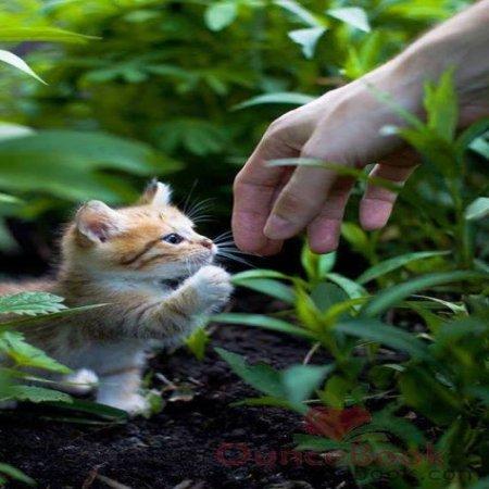 Choca Esos 5 Dulce Gatito