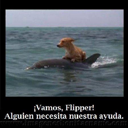 Delfin Salvando Un Perro