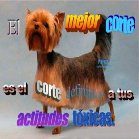 El Mejor Corte Perritos Con Frases Inspiradoras
