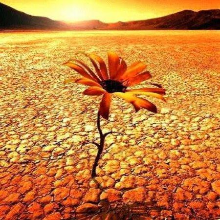 Eres Una Flor En Un Desierto