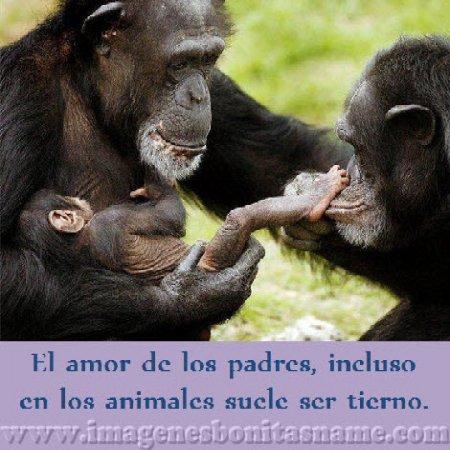 Familia De Chimpances Con Su Cria