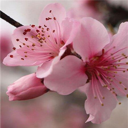 Fondo De Perfil Watsapp Flor Rosa Hermosa Imagenes Bonitas