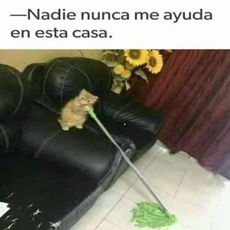 Foto De Gatito Limpiando La Casa