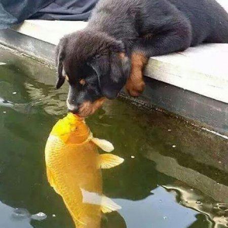 Foto Perrito Besando Un Pez