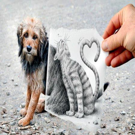 Foto Perro Real Gato Pintado