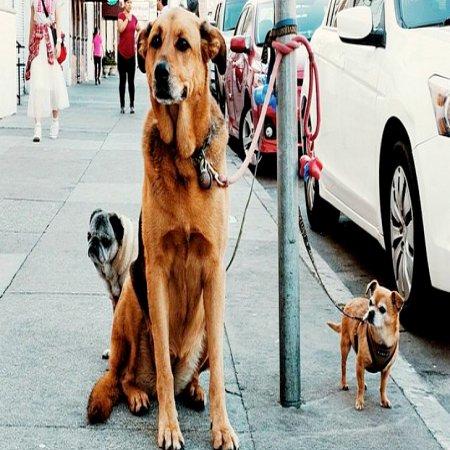 Fotos De Perros Sentados Calle