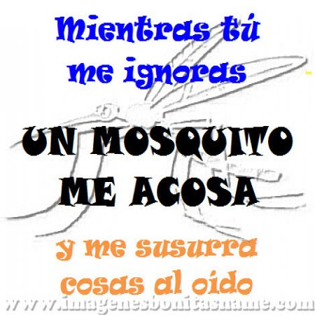 Frases De Mosquitos