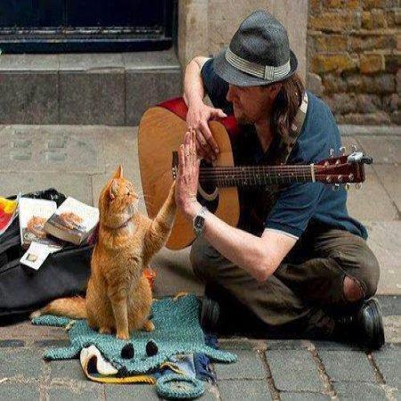 Gatito Con Guitarrista Felices