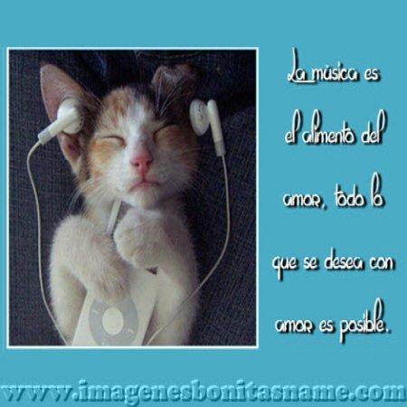 Gatito Escuchando Musica