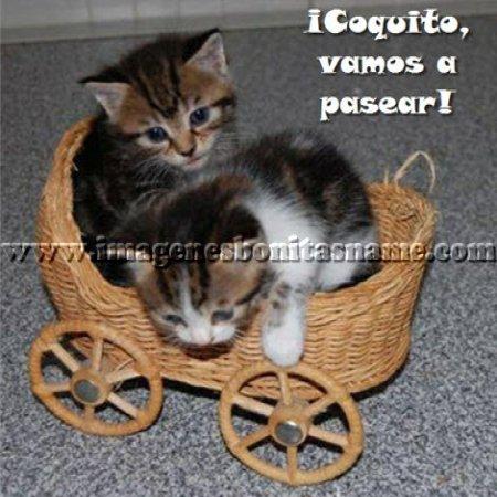 Gatitos Paseando En Carrito
