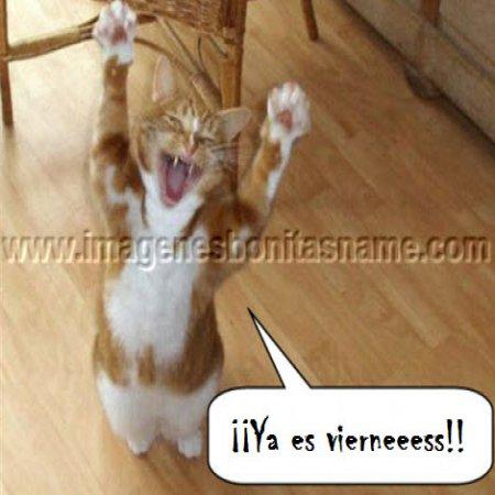 Gato Celebrando El Viernes