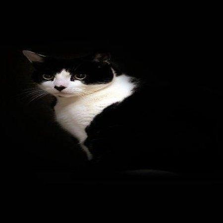 Gato Curioso Imagenes De Gatitos