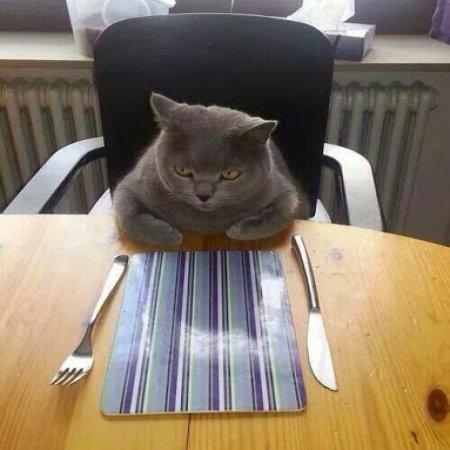 Gato Espera Su Comida Lo Dejan Al Ultimo