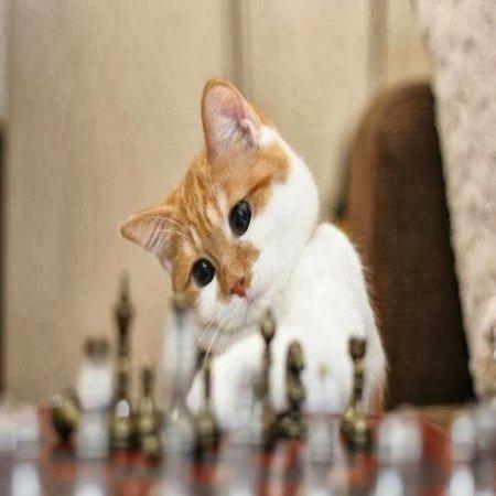 Gato Jugando Ajedrez