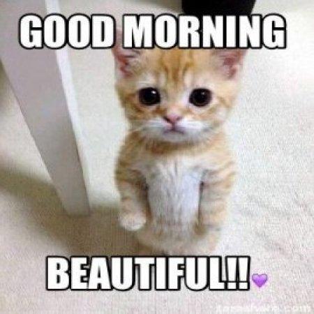 Good Morning Memes Love