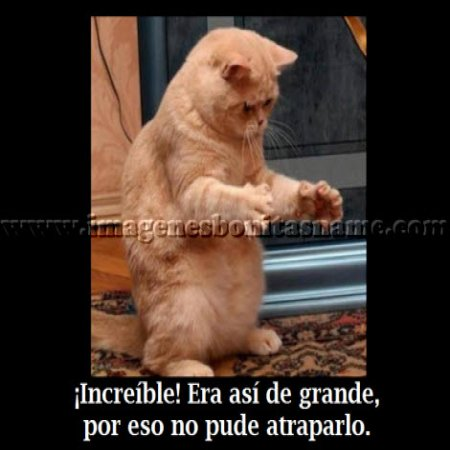 Hermoso Gato Jugando