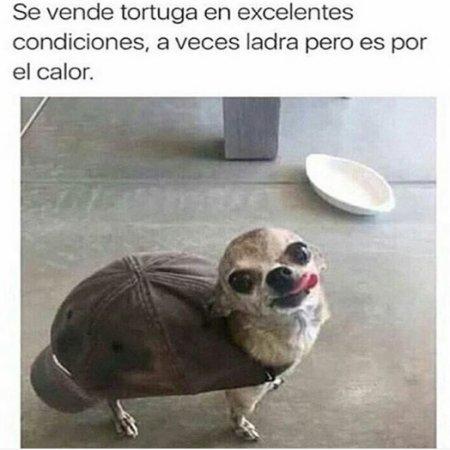 Imagen Graciosa Perro Tortuga