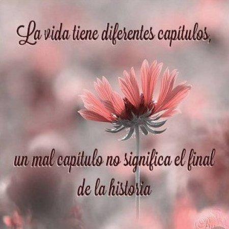 Imagenes Con Frases Y Flores