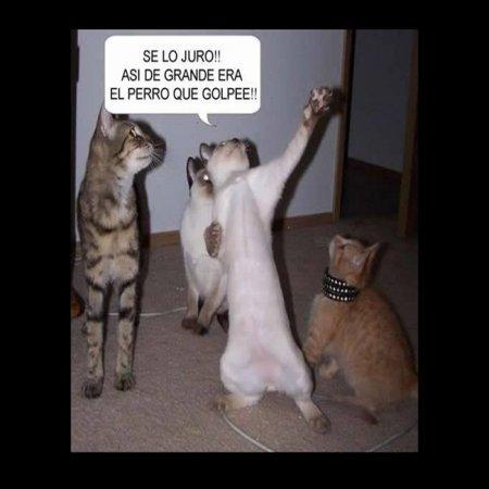 Imagenes Con Gatos Muy Chistosos