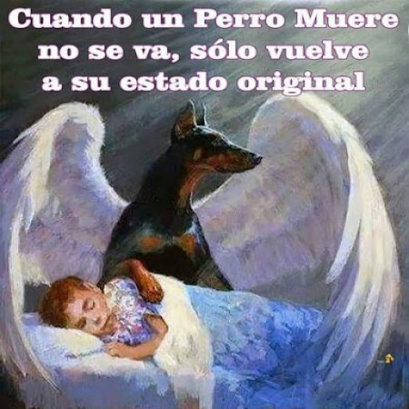 Imagenes De Animales Perro Se Va Imagenes Bonitas Frases