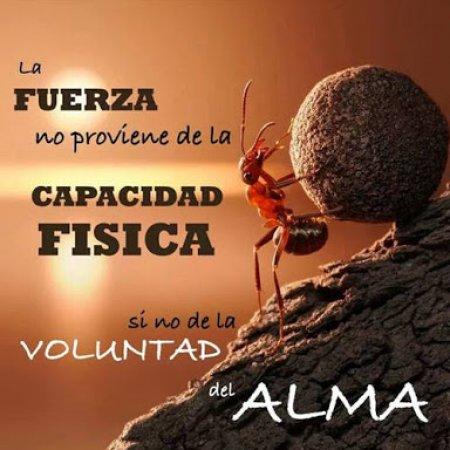 La Fuerza Voluntad Del Alma91