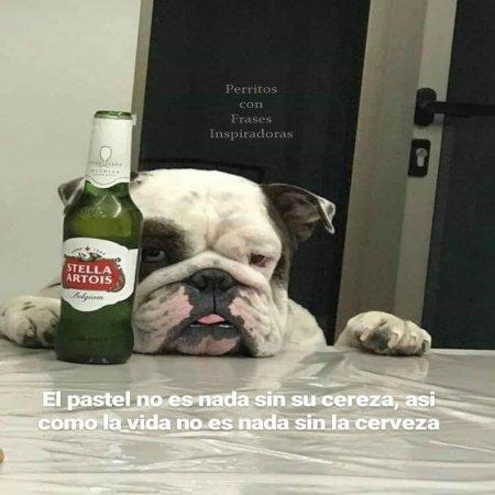 La Vida Sin Cerveza Perritos Con Frases Inspiradoras