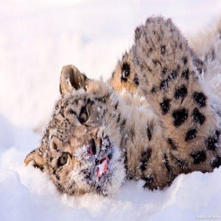 Lindo Felino Imagen Increible