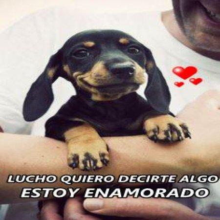 Lucho Perro Estoy Enamorado