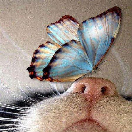 Mariposa Se Posa En Nariz De Gato