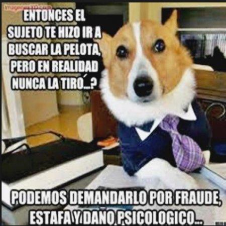 Memes De Perros Graciosos