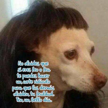 No Olvides Frases Graciosas De Perritos