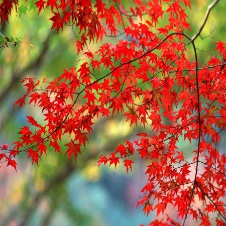 Paisajes Naturales Flores Rojas