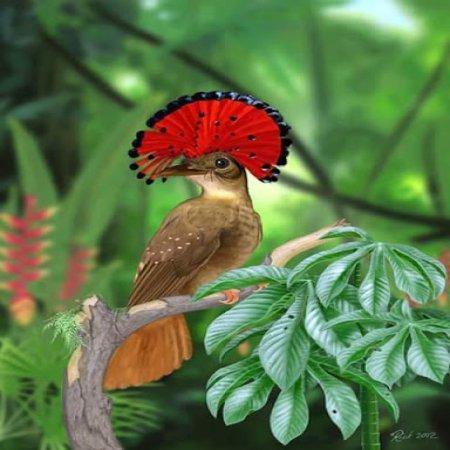 Pajaro Gracioso Imagen De Aves