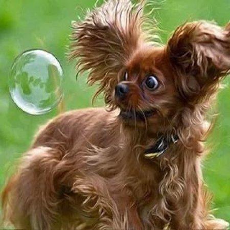 Perro Asustado Burbuja