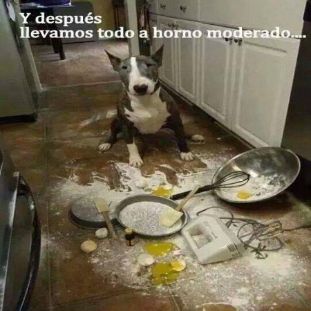 Perro Chef No Sale Bien El Pastel