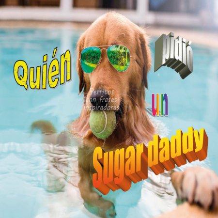 Perro Sugar Daddy