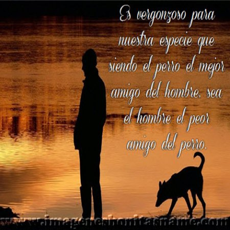 Perro Y Amo Paseando