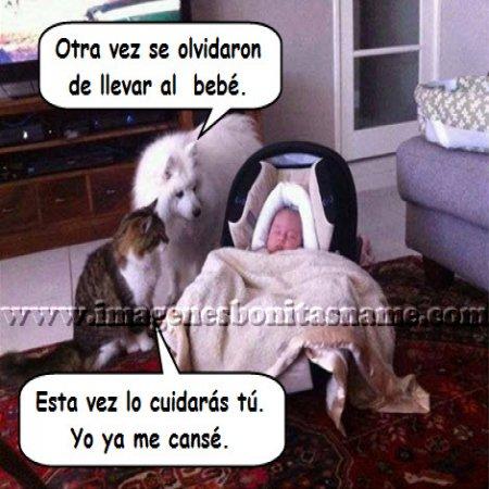 Perro Y Gato Cuidando Bebe