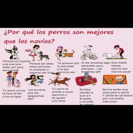 Por Que Los Perros Son Mejores Que Los Novios92