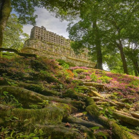 Ruinas Mayas Bosque Escondido