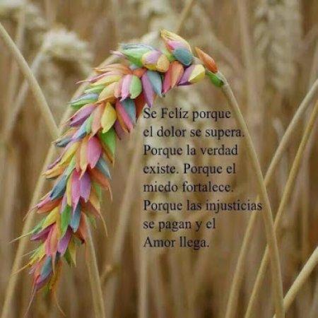 Se Feliz Frase Para Vivir En Armonia
