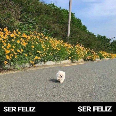 Ser Feliz Perritos Con Frases Inspiradoras
