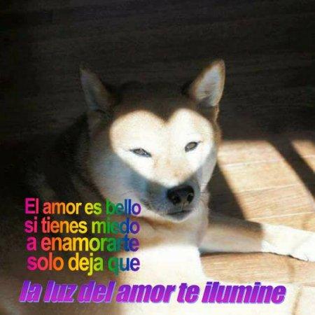 Solo Deja Que La Luz Del Amor Te Ilumine