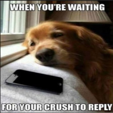 Waiting For Your Crush