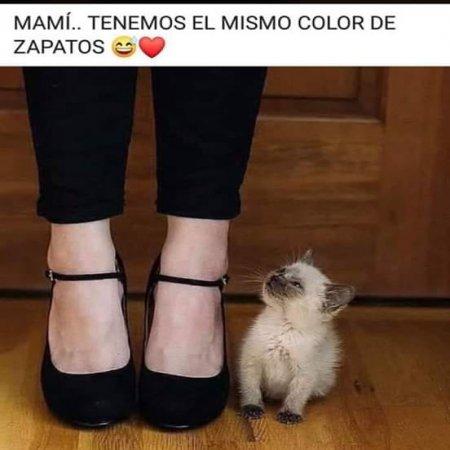 Zapatos Del Mismo Color