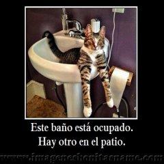 Bello Gato En El Lavabo
