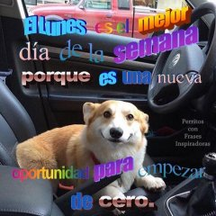 Forever Doce Rosas